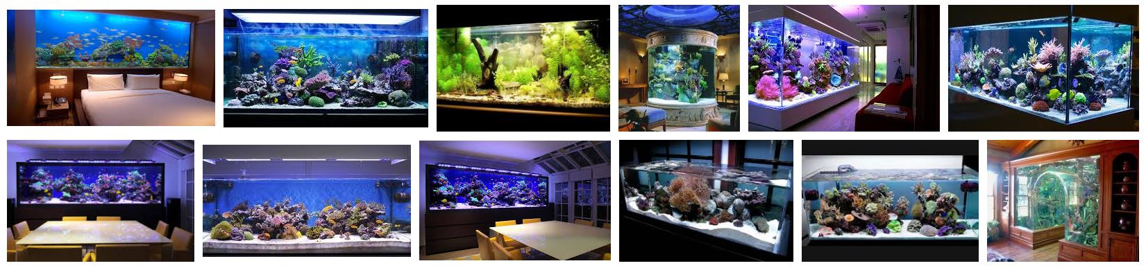 Aquatic Life Aquariums