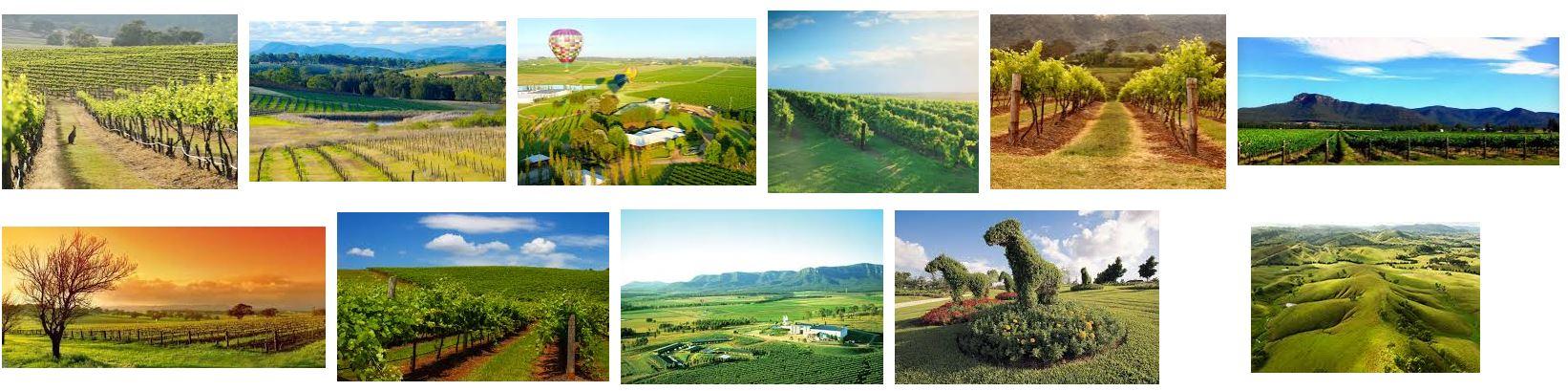 Hunter Valley Wines